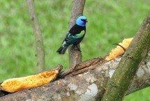 avistamiento-aves.jpg