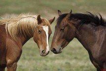 caballos-montana.jpg